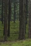 2009-orkelljunga-terrang-2