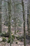 2011-frosta-lopare-i-skogen